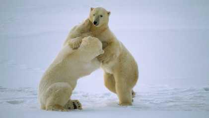 Animales jugando en la nieve