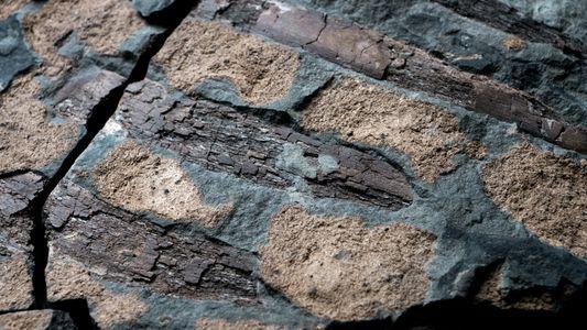 El Borealopelta markmitchelli: una nueva especie de nodosaurio