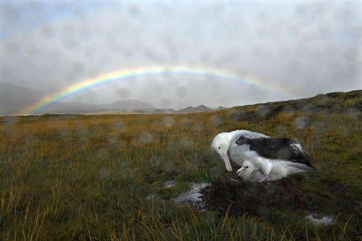 Un albatros viajero