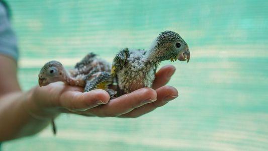 El rescate de animales en los incendios amazónicos