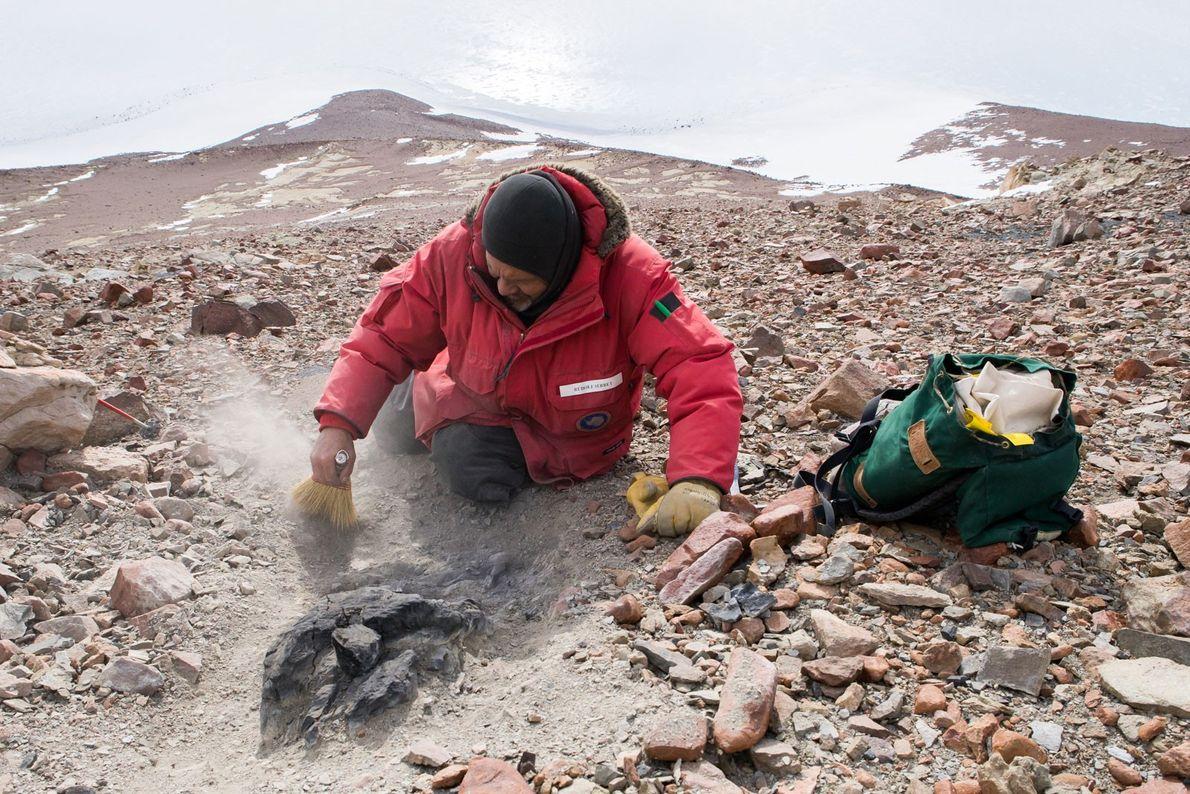 En los costados del pico Graphite, Rudolph Serbet descubre un tocón fosilizado de 250 millones de …