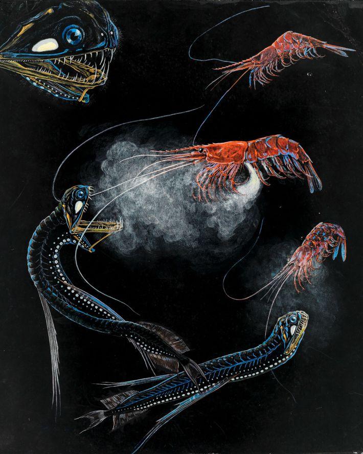 Camarones y peces