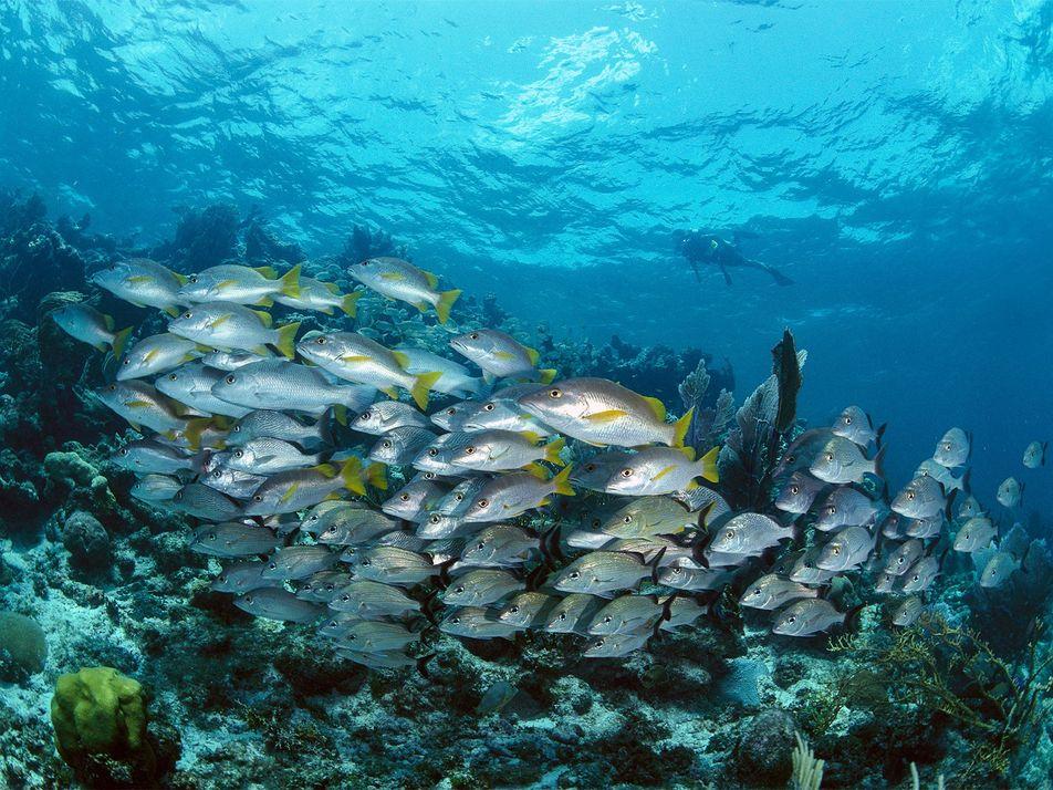 El hermoso océano de Belice