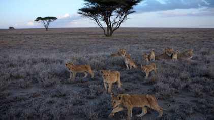 Los Cinco Grandes de África