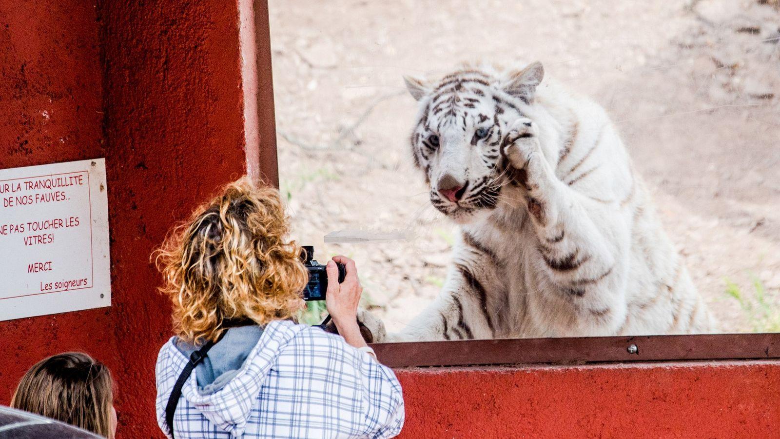 Zoo de Francia