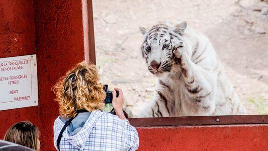 ¿Por qué la gente se juega la vida para sacarse selfis con animales?