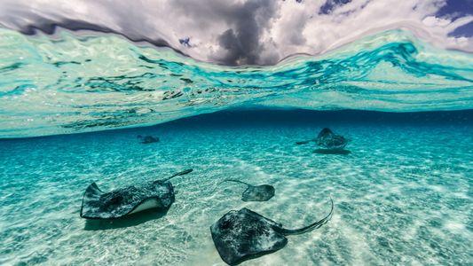 La belleza de la vida subacuática, por David Doubilet