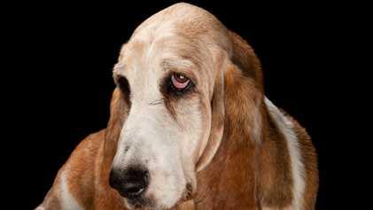 ¿Por qué los perros son tan amistosos? La ciencia tiene la respuesta