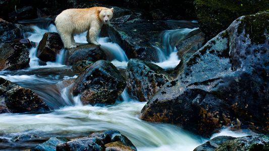 Estos son los habitantes salvajes del bosque del Gran Oso