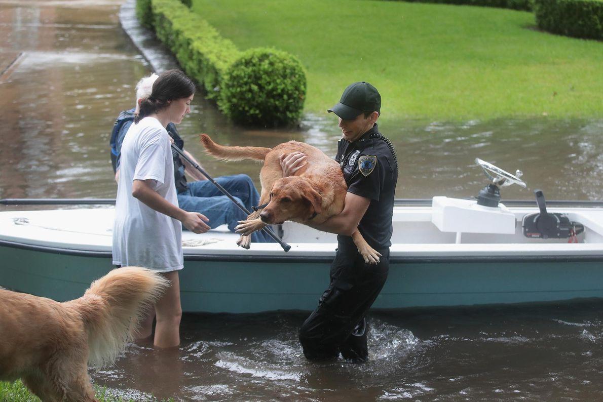 Rescate de personas y perros