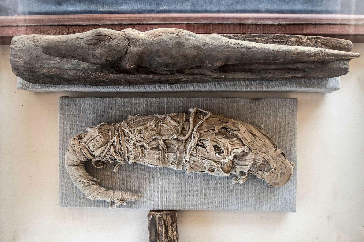 Cocodrilo momificado
