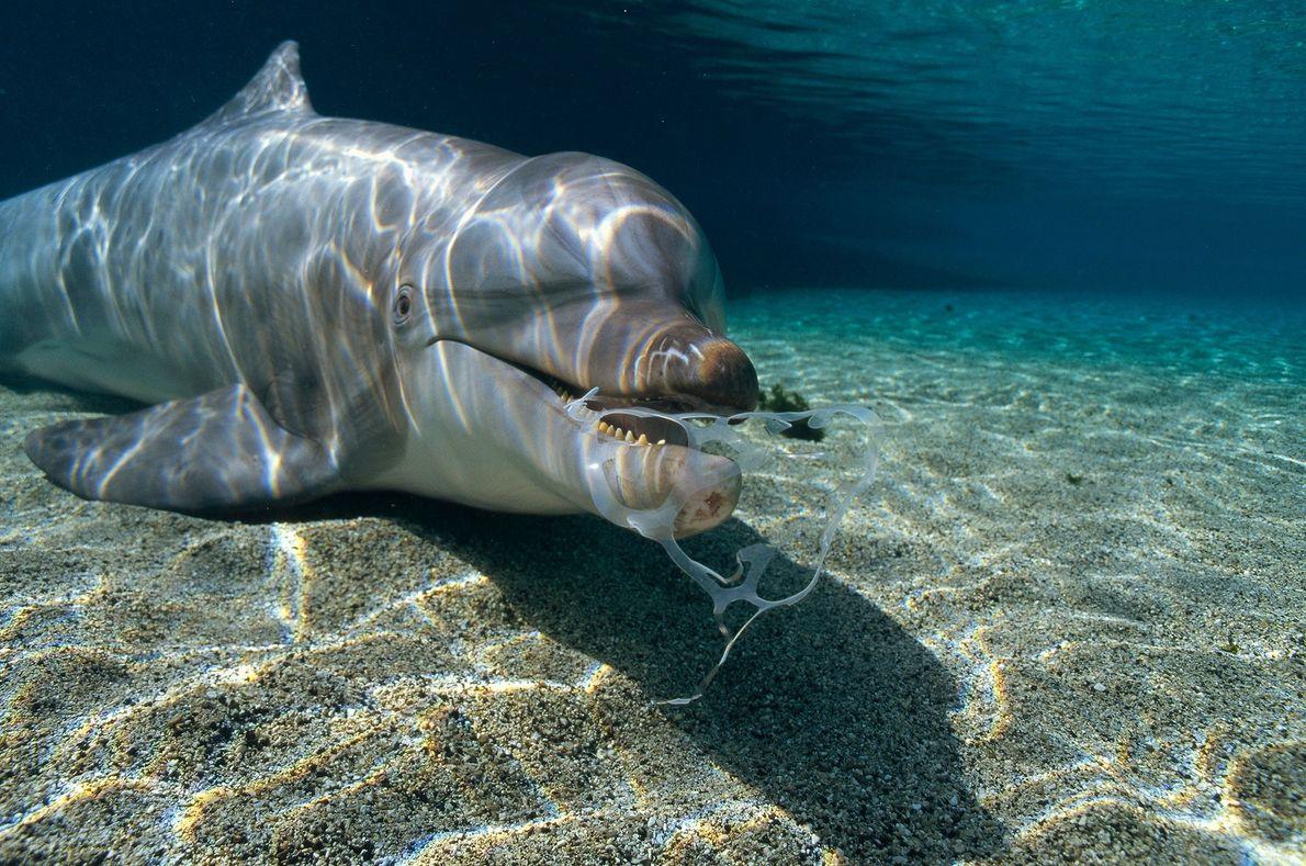 Un delfín nariz de botella