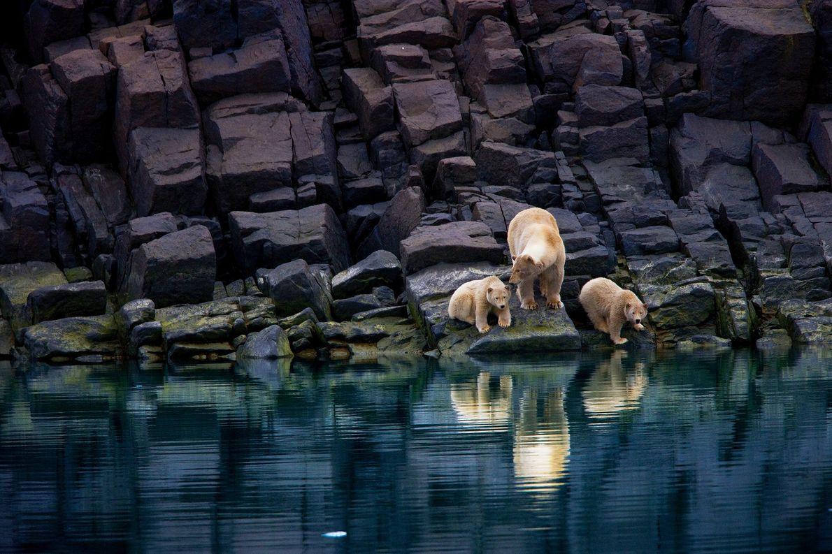 Una osa polar y sus oseznos