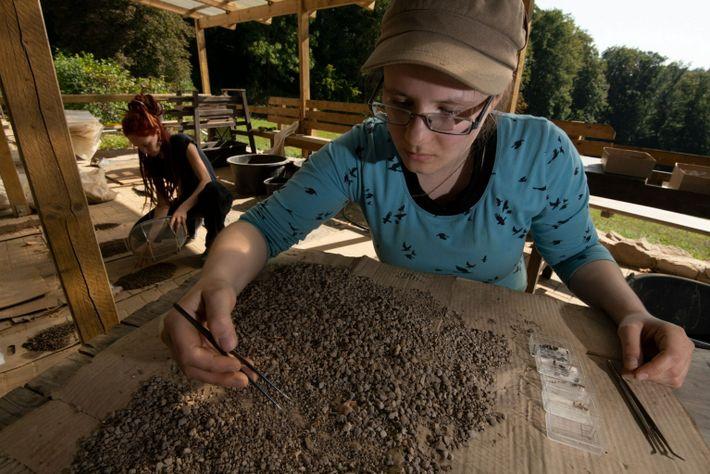 Estudiantes de arqueología trabajando