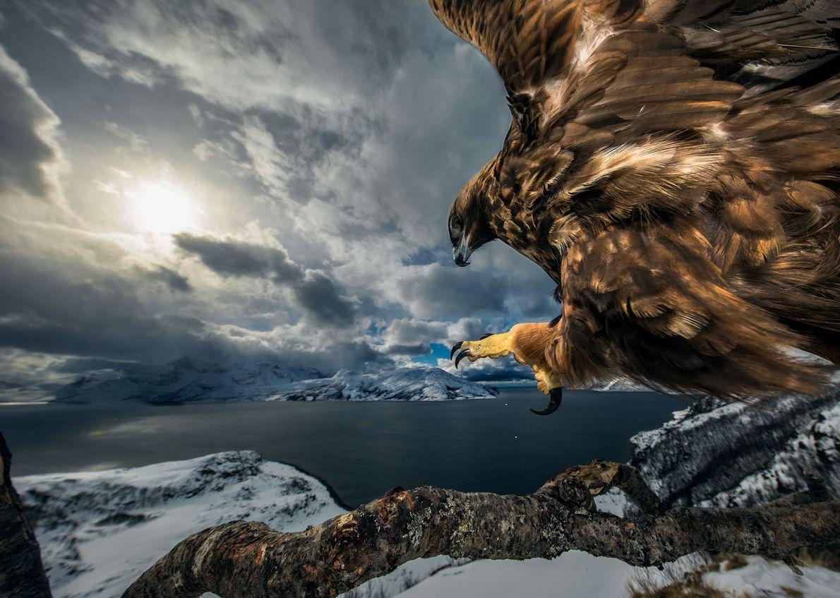 Águila real, Audun Rikardson