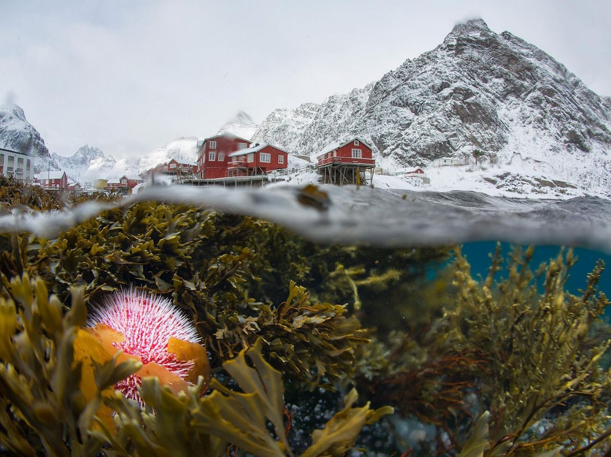 SERGEY LUKANKIN, NATIONAL GEOGRAPHIC YOUR SHOT