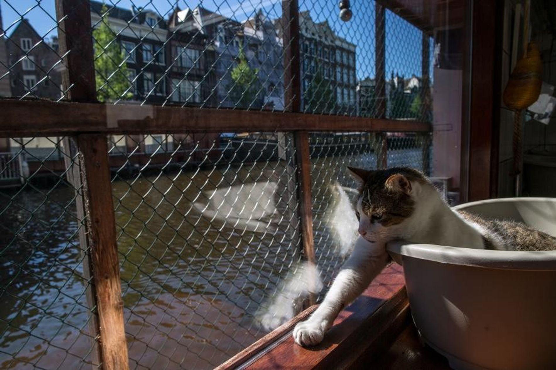 Bienvenido al barco de los gatos, el único santuario de animales flotante