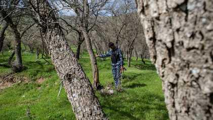 Irak intenta salvar los últimos bosques de Oriente Medio de los incendios