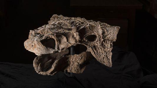 Esta nueva especie de dinosaurio tiene el nombre de un monstruo de los Cazafantasmas