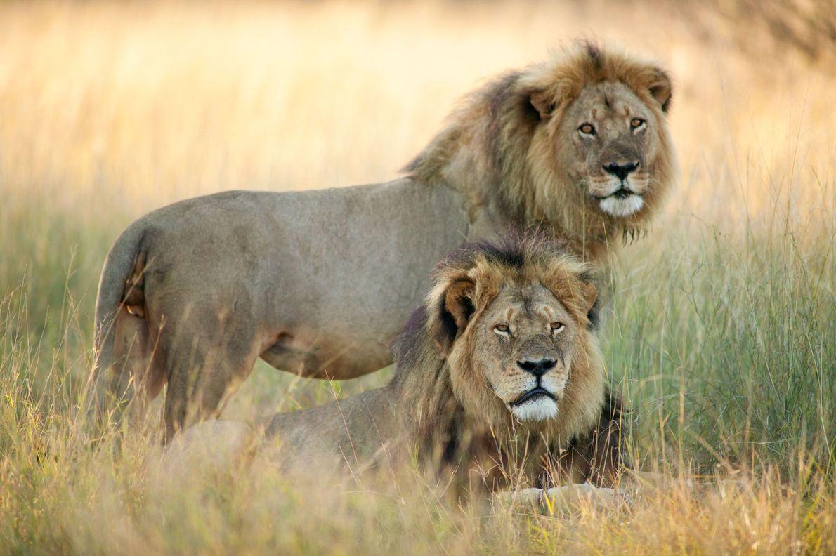 Cecil y Jericó