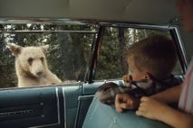 Oso pardo en Yellowstone