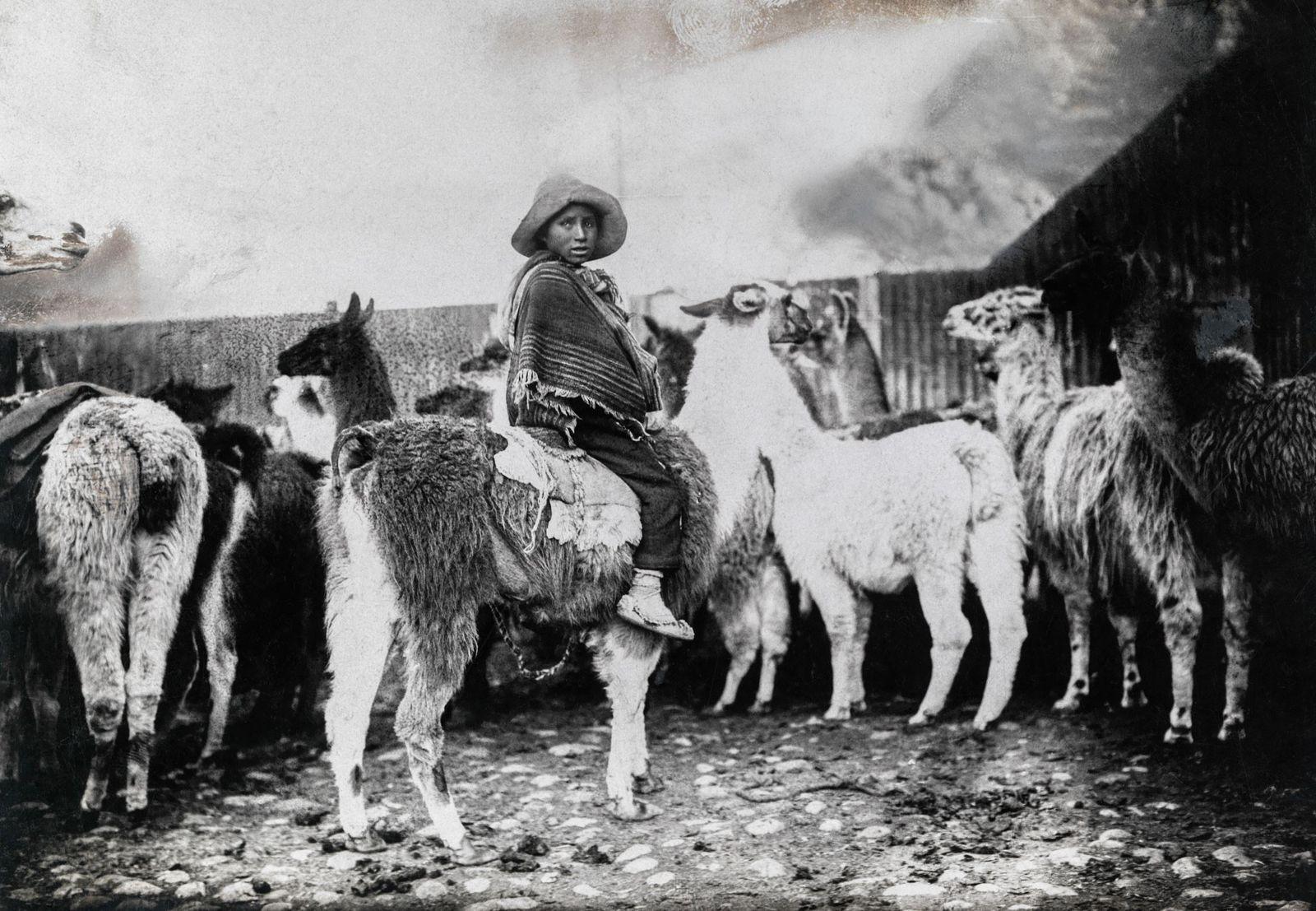 Pastor de llamas, Bolivia