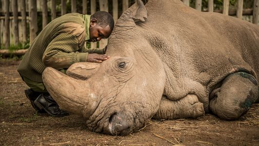 Fotos de Instagram: el vínculo entre animales y humanos