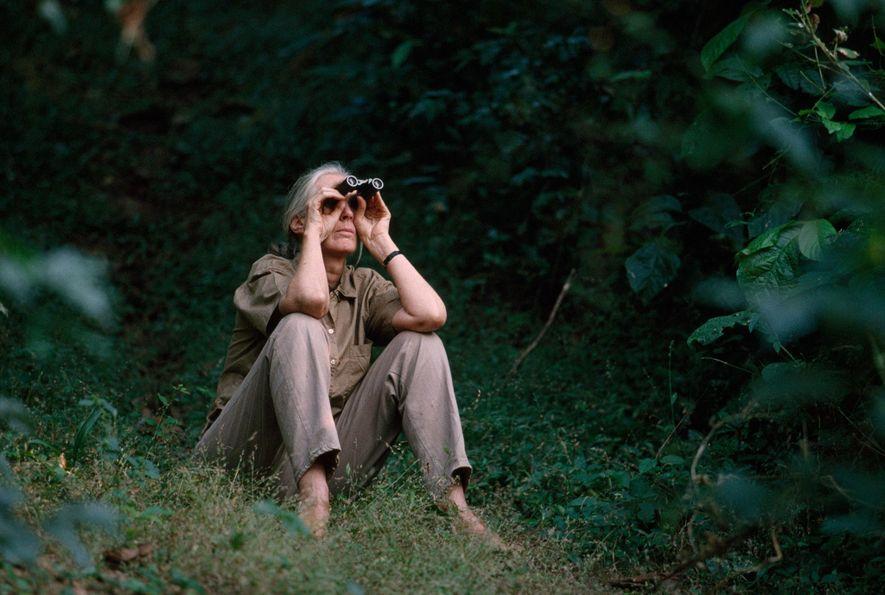 Jane Goodall ya no pasa tanto tiempo en el parque nacional de Gombe por sus iniciativas ...