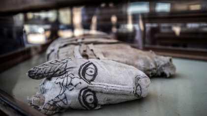 Animales momificados hallados en Egipto