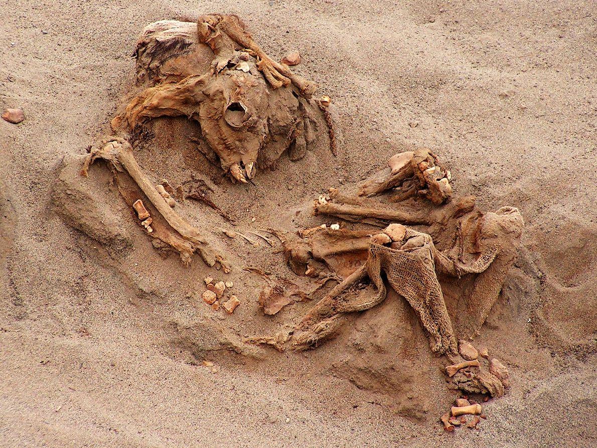 Huesos de llamas y humanos
