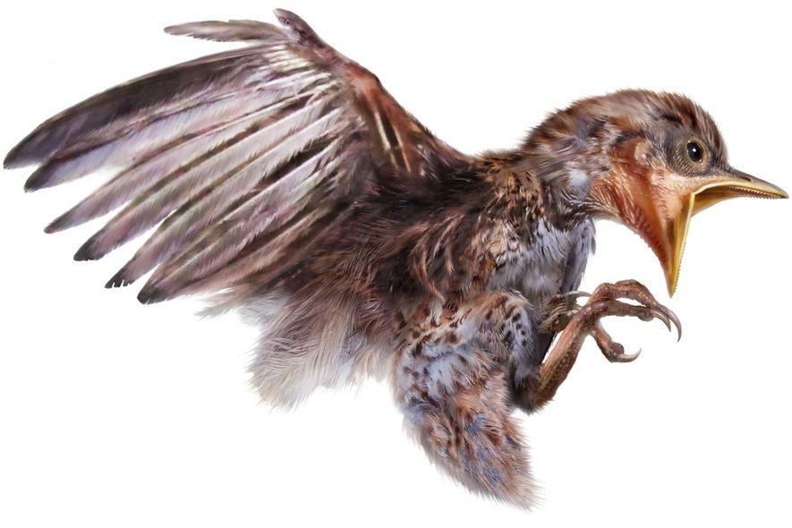 El ave perteneció a un antiguo grupo de aves con dientes llamado enantiornites, que se extinguieron ...