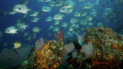 Coíba, la vida bajo del mar de un paraíso natural