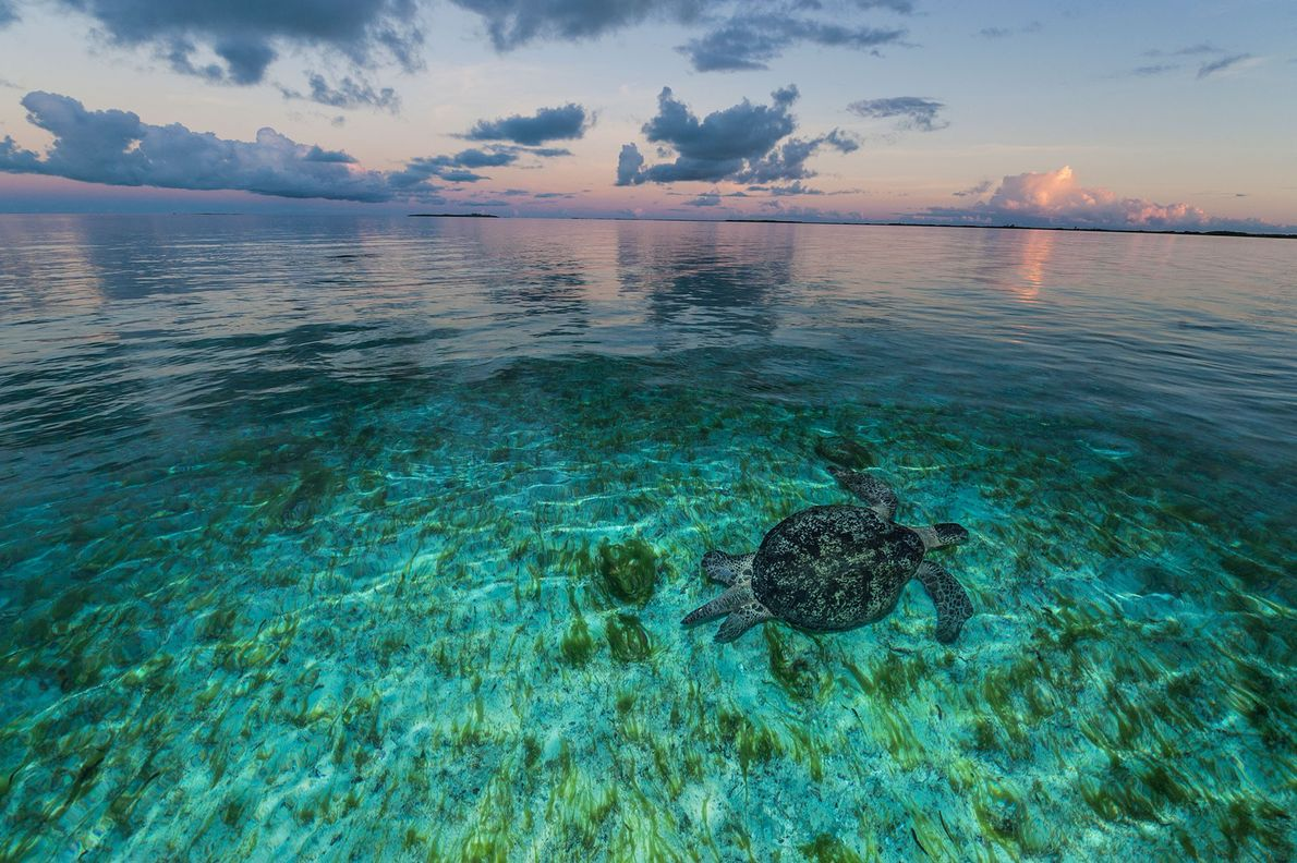 Una tortuga marina nadando