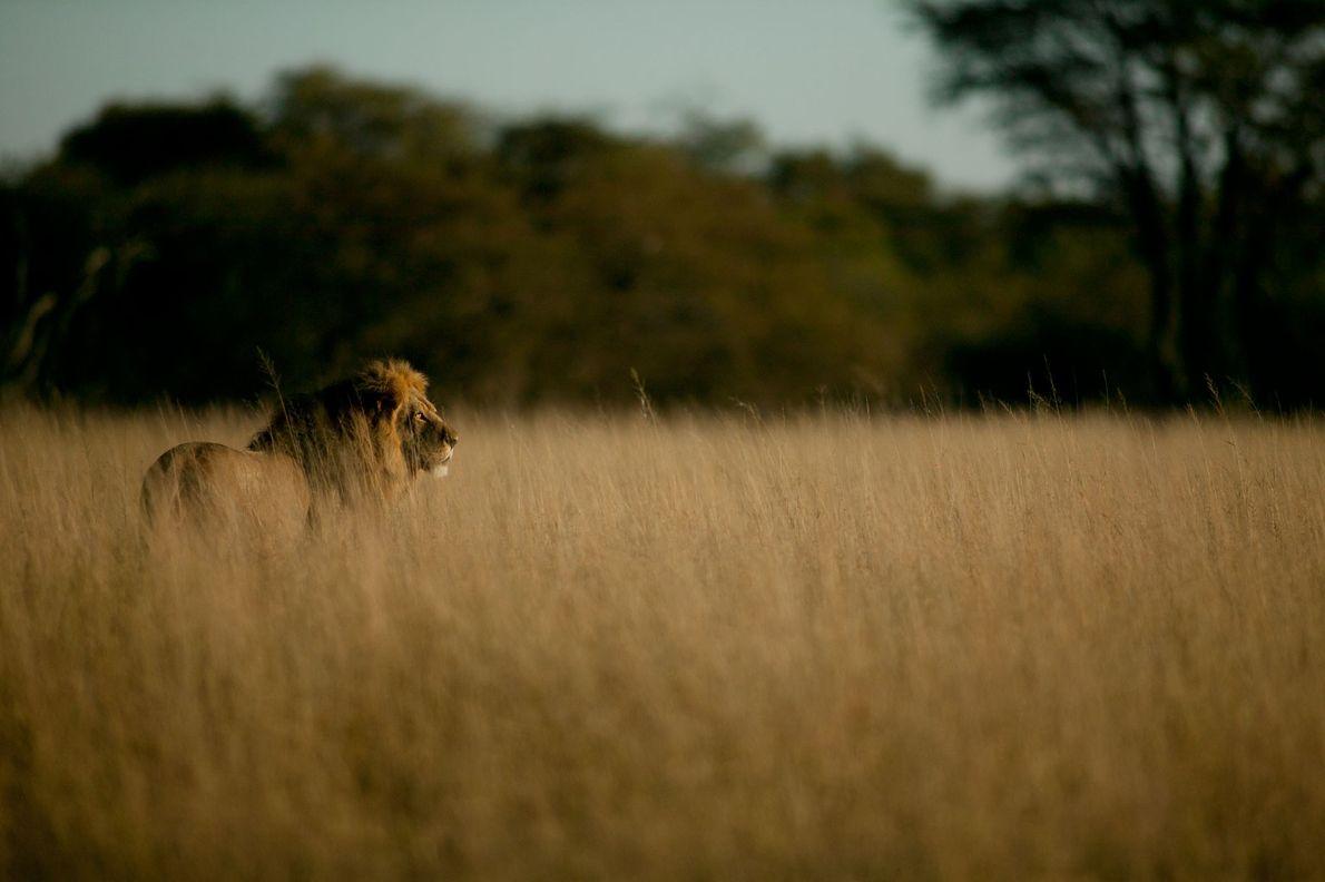 La matanza de Cecil