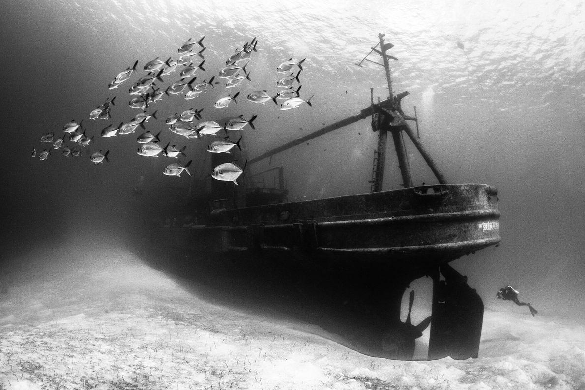 Naufragio del buque de los Estados Unidos Kittiwake