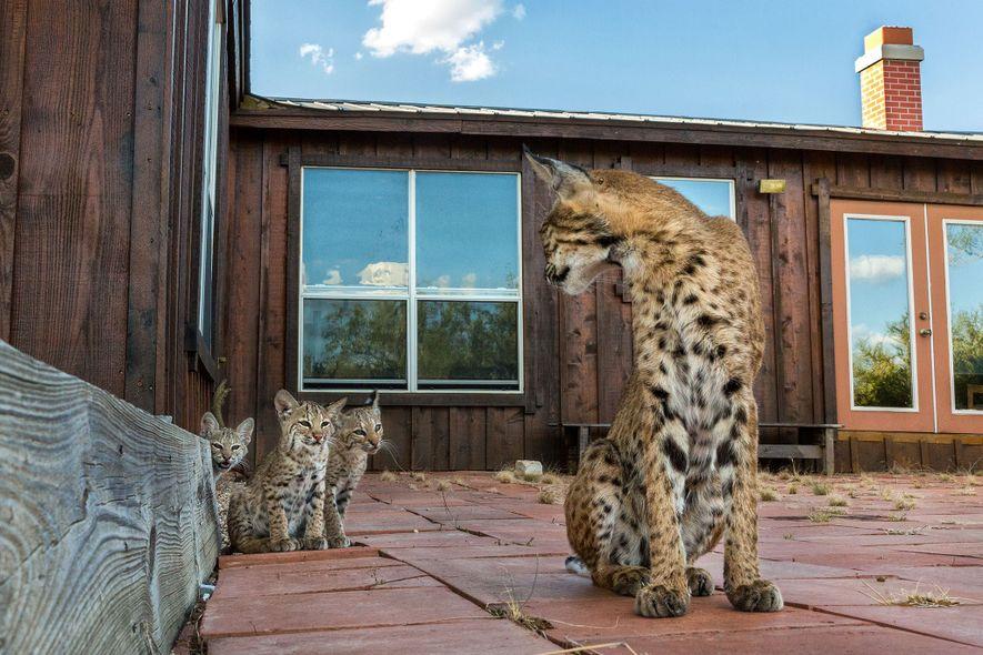 La madre cuidaba de sus crías enseñándoles cada día.