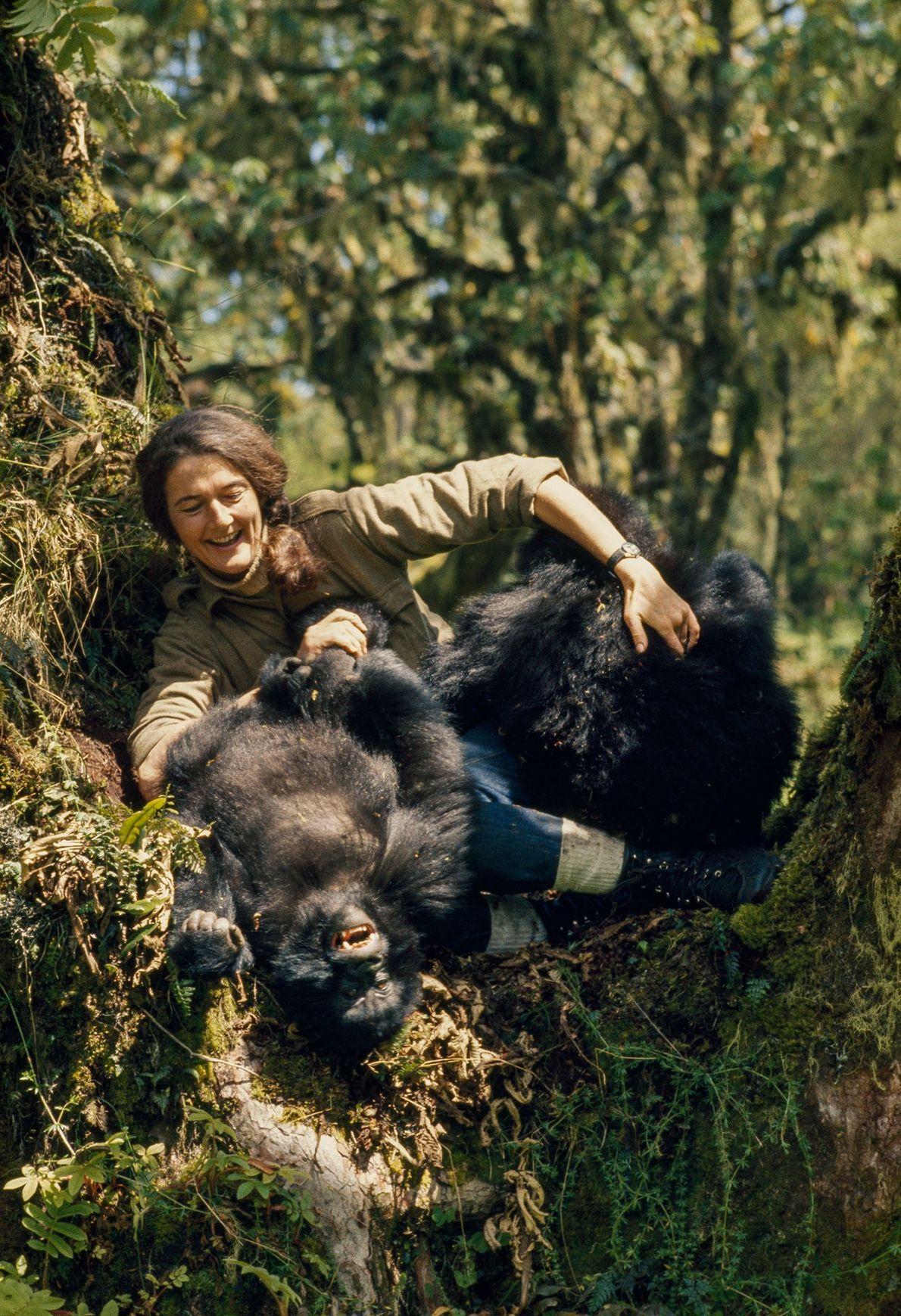 Fossey con gorilas