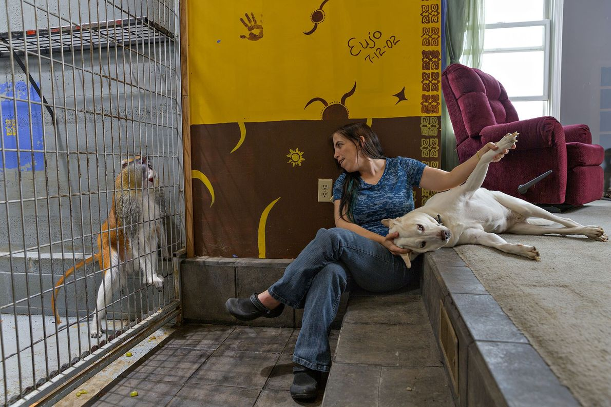 Bobbi Phelan bought a patas monkey in part because they tend to avoid conflict. Even so, ...