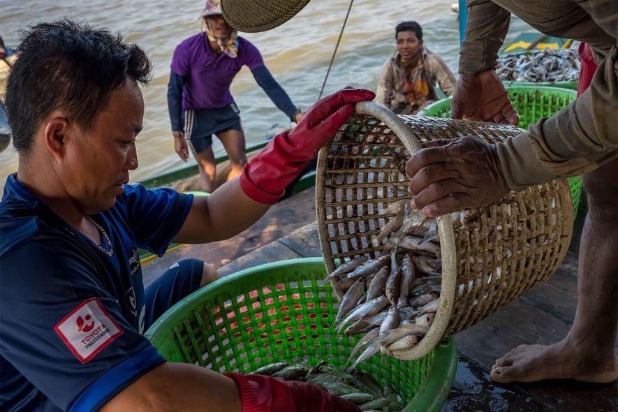 Los pescadores cargan su captura en el embarcadero de un distribuidor en Kompong Luong, en el lago Tonlé Sap.