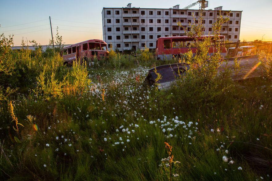 Plantas como la cola de zorro y el algodón son ubicuas en Chersky, Rusia, durante el ...