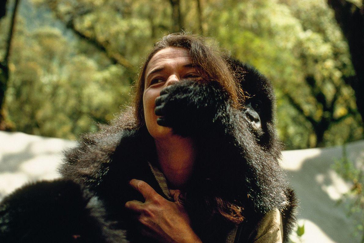 Cambió la percepción de los gorilas