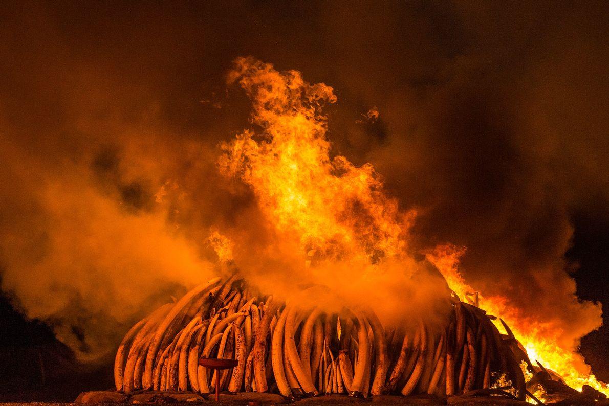 Marfil en llamas, Nairobi