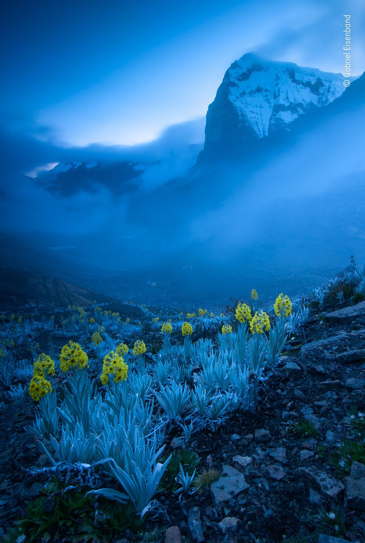 Flores en Colombia