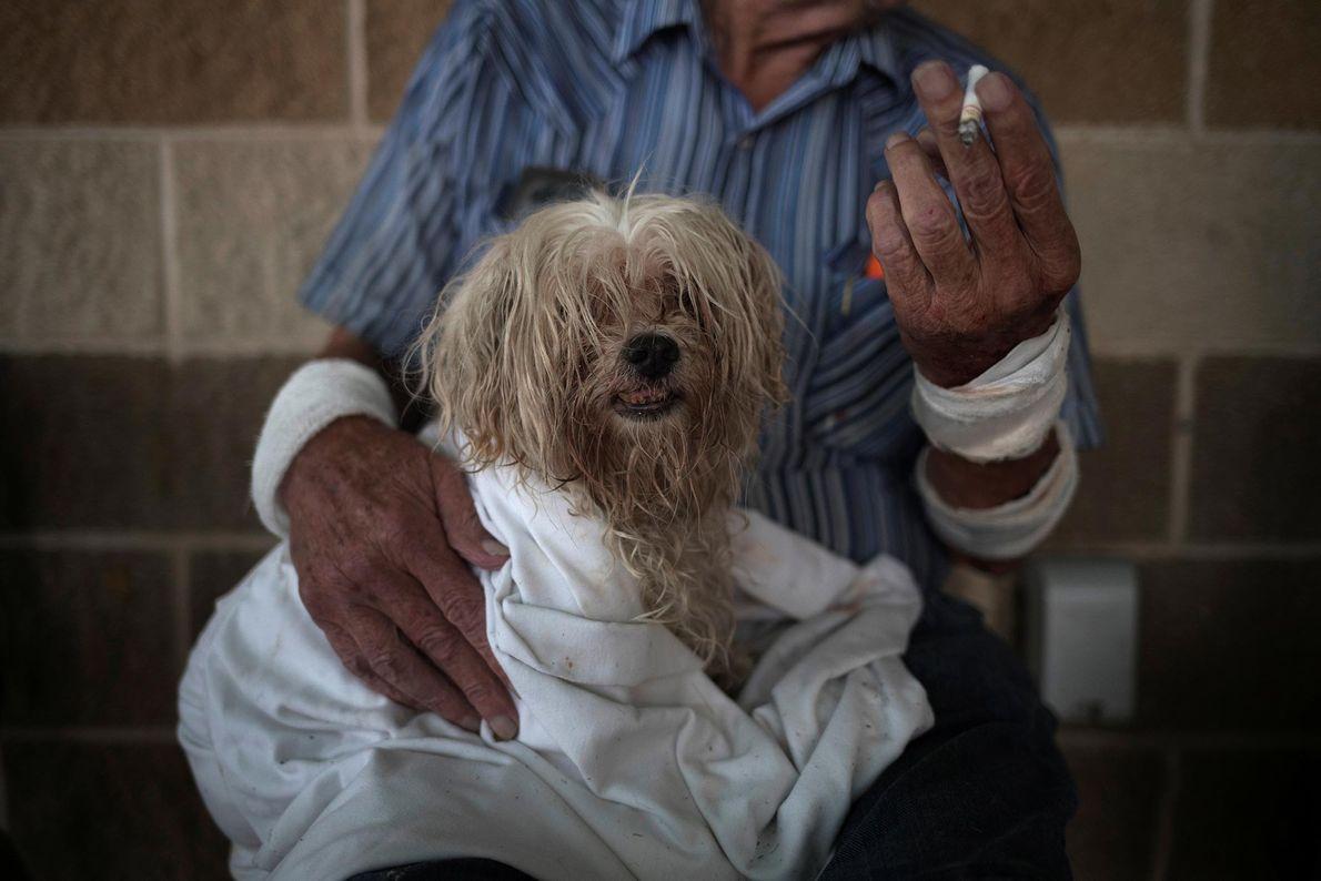 Bentley, un maltés de 10 años