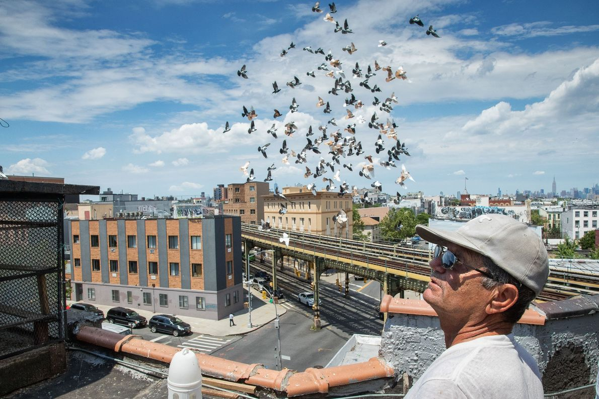 During his lunch hour, Frank Tabone (aka Franky Fast Hands) watches the pigeons belonging to his ...