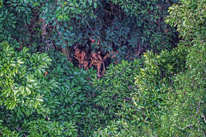 Imagen de los miembros de una tribu amazónica escondiéndose bajo un árbol