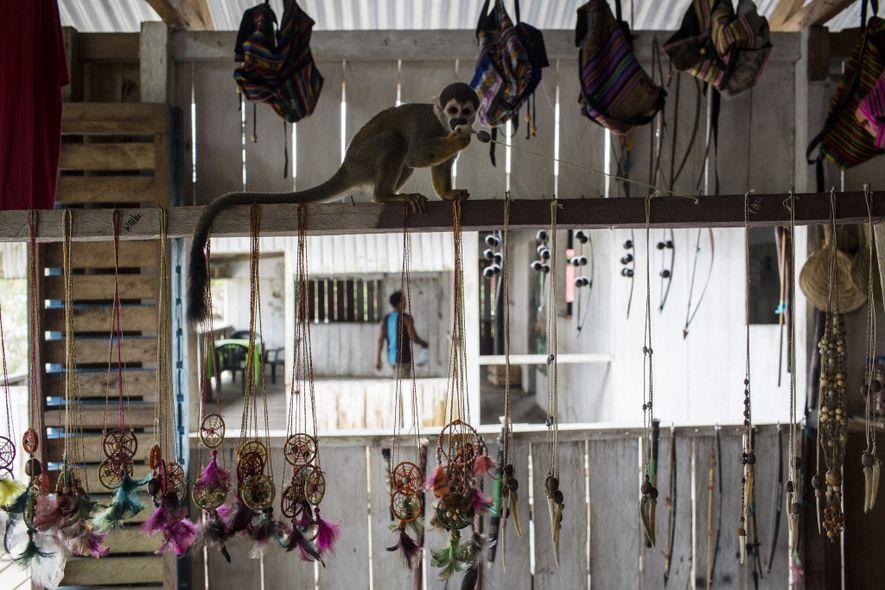 Un mono ardilla juega con un collar