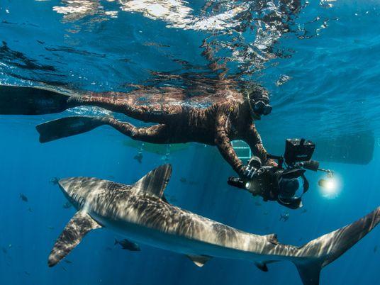 Pristine Seas: España lidera la lucha por la conservación de los océanos prístinos del planeta