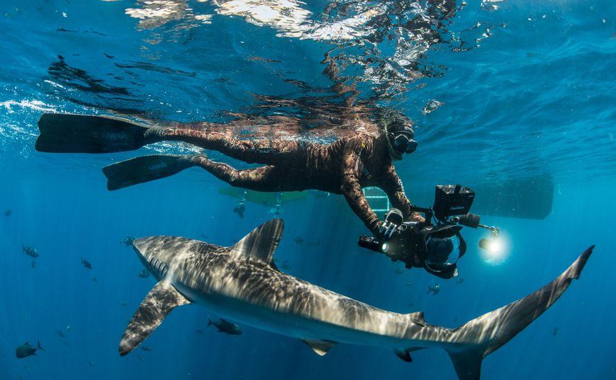 Manu San Félix filmando los movimientos de un tiburón.
