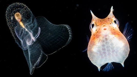 Criaturas nocturnas por Jennifer Hayes y David Doubilet